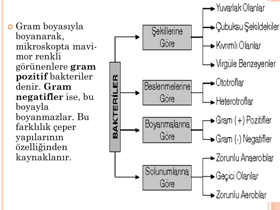 S ORU Canlıların bilimsel olarak adlandırılmasında kullanılan yönteme göre; I.
