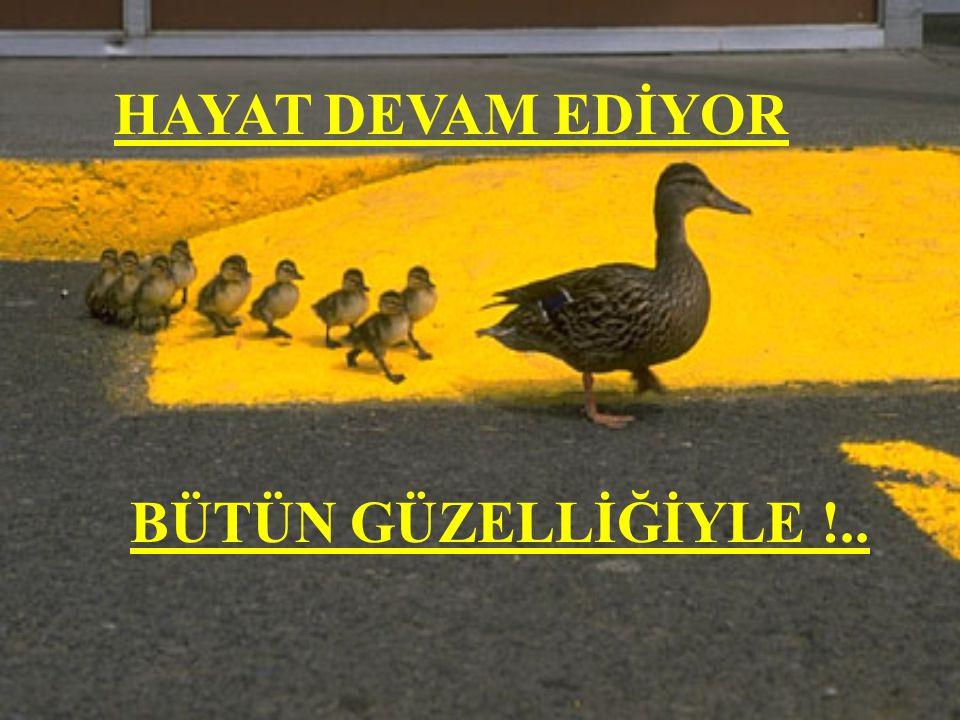 HAYAT DEVAM EDİYOR BÜTÜN GÜZELLİĞİYLE !..