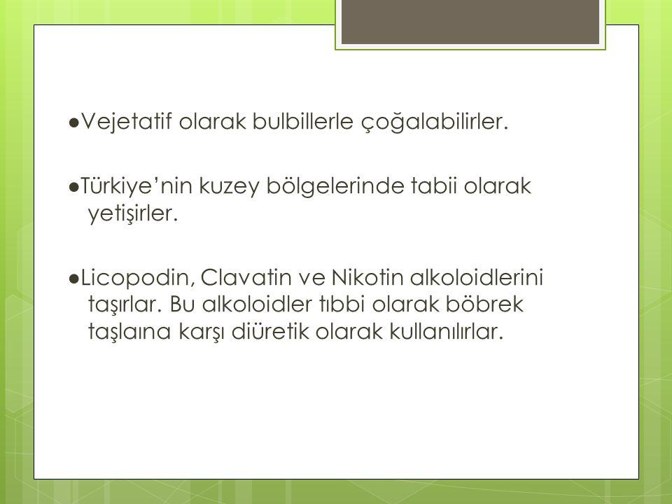 ●Vejetatif olarak bulbillerle çoğalabilirler. ●Türkiye'nin kuzey bölgelerinde tabii olarak yetişirler. ●Licopodin, Clavatin ve Nikotin alkoloidlerini