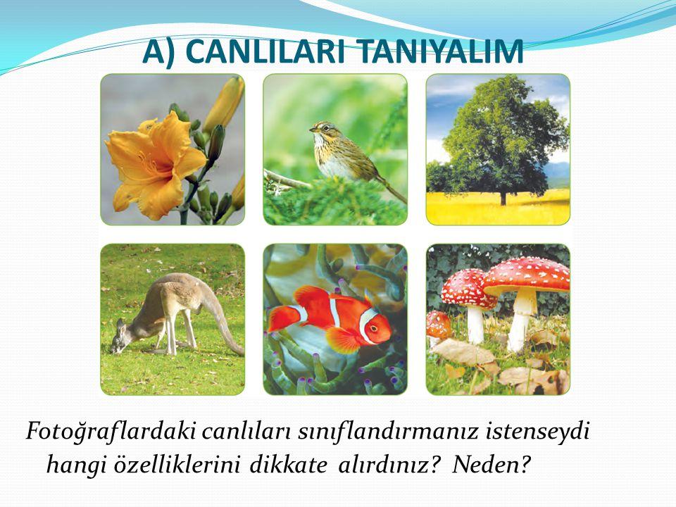 A) CANLILARI TANIYALIM Fotoğraflardaki canlıları sınıflandırmanız istenseydi hangi özelliklerini dikkate alırdınız? Neden?