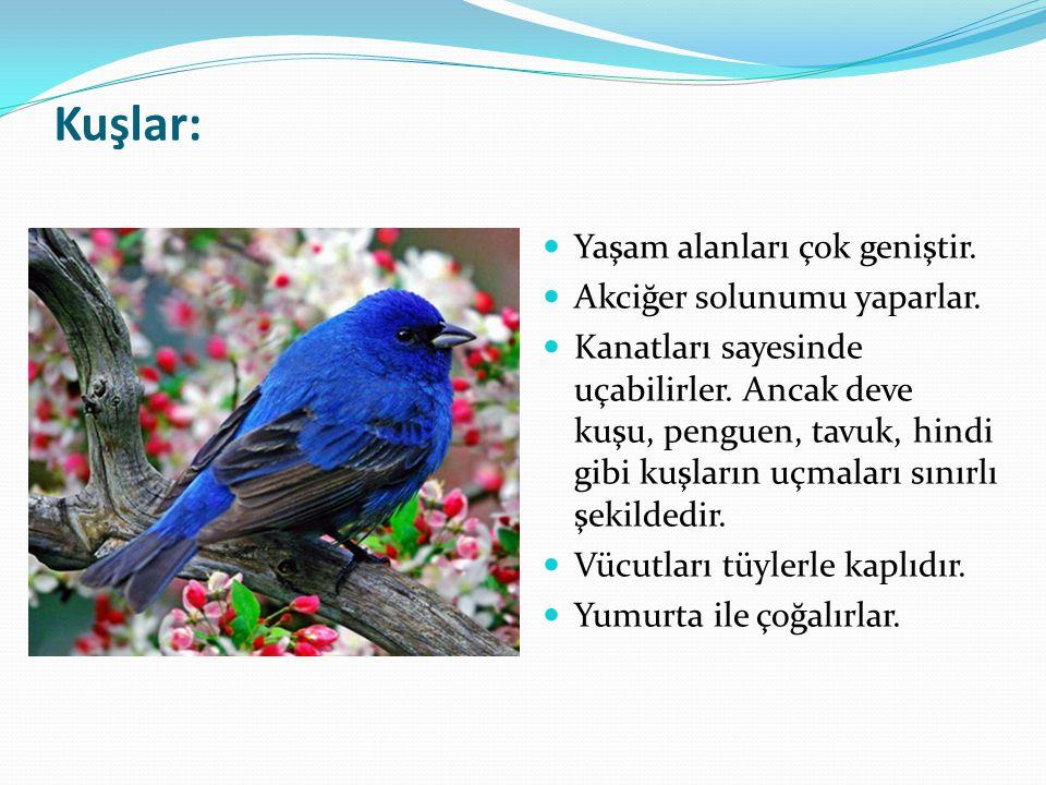 Kuşlar: Yaşam alanları çok geniştir. Akciğer solunumu yaparlar. Kanatları sayesinde uçabilirler. Ancak deve kuşu, penguen, tavuk, hindi gibi kuşların
