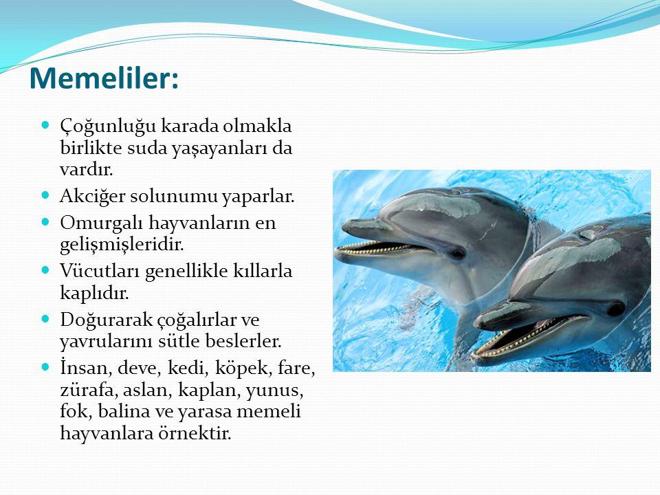 Memeliler: Çoğunluğu karada olmakla birlikte suda yaşayanları da vardır. Akciğer solunumu yaparlar. Omurgalı hayvanların en gelişmişleridir. Vücutları