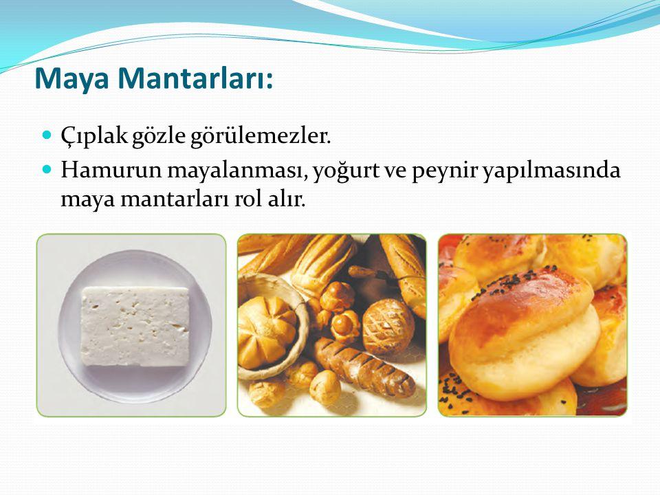 Maya Mantarları: Çıplak gözle görülemezler. Hamurun mayalanması, yoğurt ve peynir yapılmasında maya mantarları rol alır.