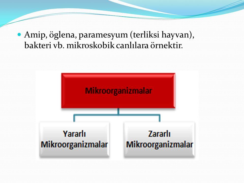 Amip, öglena, paramesyum (terliksi hayvan), bakteri vb. mikroskobik canlılara örnektir.