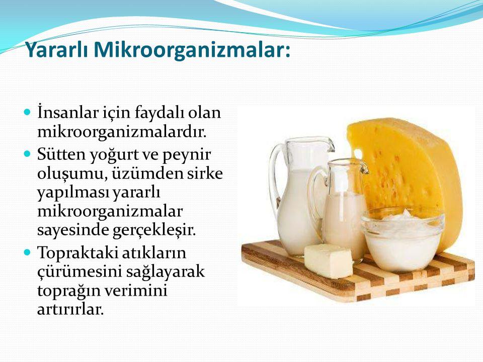 Yararlı Mikroorganizmalar: İnsanlar için faydalı olan mikroorganizmalardır. Sütten yoğurt ve peynir oluşumu, üzümden sirke yapılması yararlı mikroorga