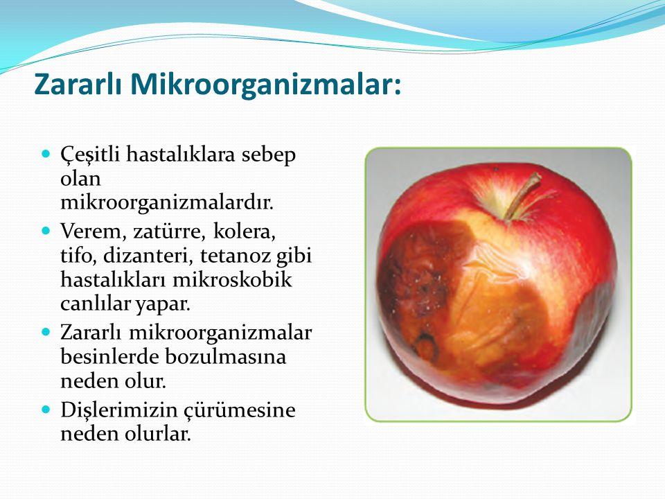 Zararlı Mikroorganizmalar: Çeşitli hastalıklara sebep olan mikroorganizmalardır. Verem, zatürre, kolera, tifo, dizanteri, tetanoz gibi hastalıkları mi