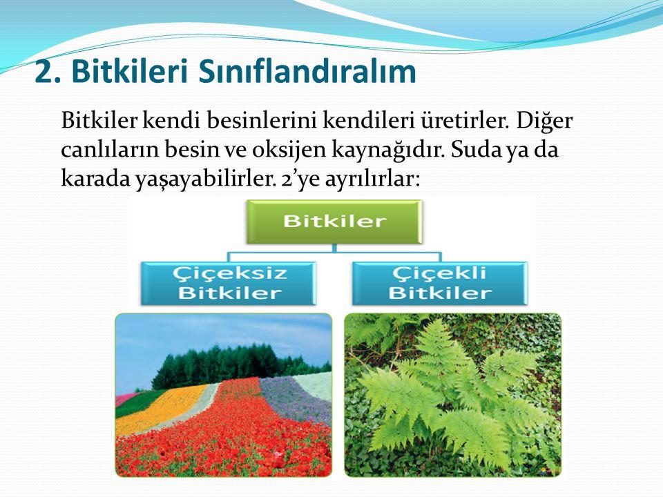 2. Bitkileri Sınıflandıralım Bitkiler kendi besinlerini kendileri üretirler. Diğer canlıların besin ve oksijen kaynağıdır. Suda ya da karada yaşayabil