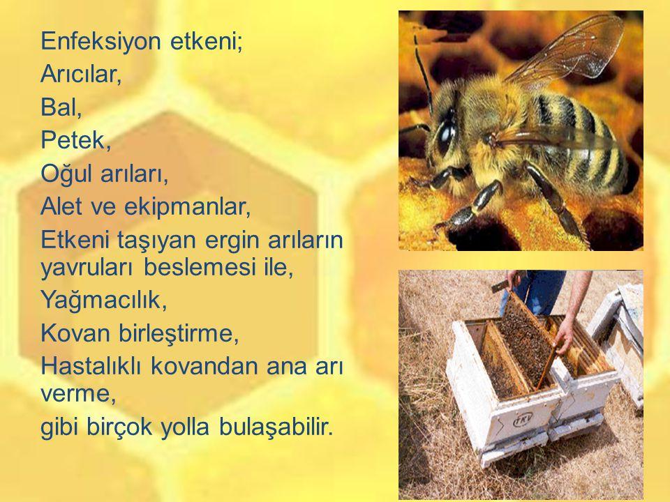 Kovanları Gümüş ile kaplamak bakteriyel hastalıklara karşı arılarımızı da korur mu Sorununun yanıtını bulmak için öncelikle laboratuvar koşullarında adi yavru çürüklüğü nedeni bakteriler üzerinde, 100ppm nano gümüş solüsyon denendi.