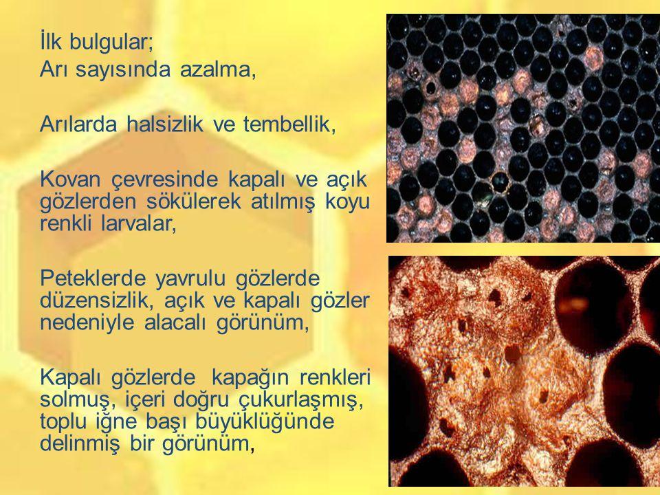 Ölü larvalar önce donuk beyaz, açık kahve, koyu kahve ve sonunda siyah renkli, Ölü larva çikolata rengini aldığında bir kibrit çöpü sokulup çekilirse, larva iplik gibi 2.5-10 cm uzar, Ölü larvaları içeren peteklerde tipik zamk kokusu veya bozulmuş balık kokusu, Eğer ölüm pupa safhasında olursa, pupa ya da öküz dili olarak isimlendirilen ve pupaların ağız organellerinin dışarı uzaması ve petek gözünün tavanına yapışması ile sonuçlanan ve hastalık için karakteristik olan bulgulardan birisi görülür.