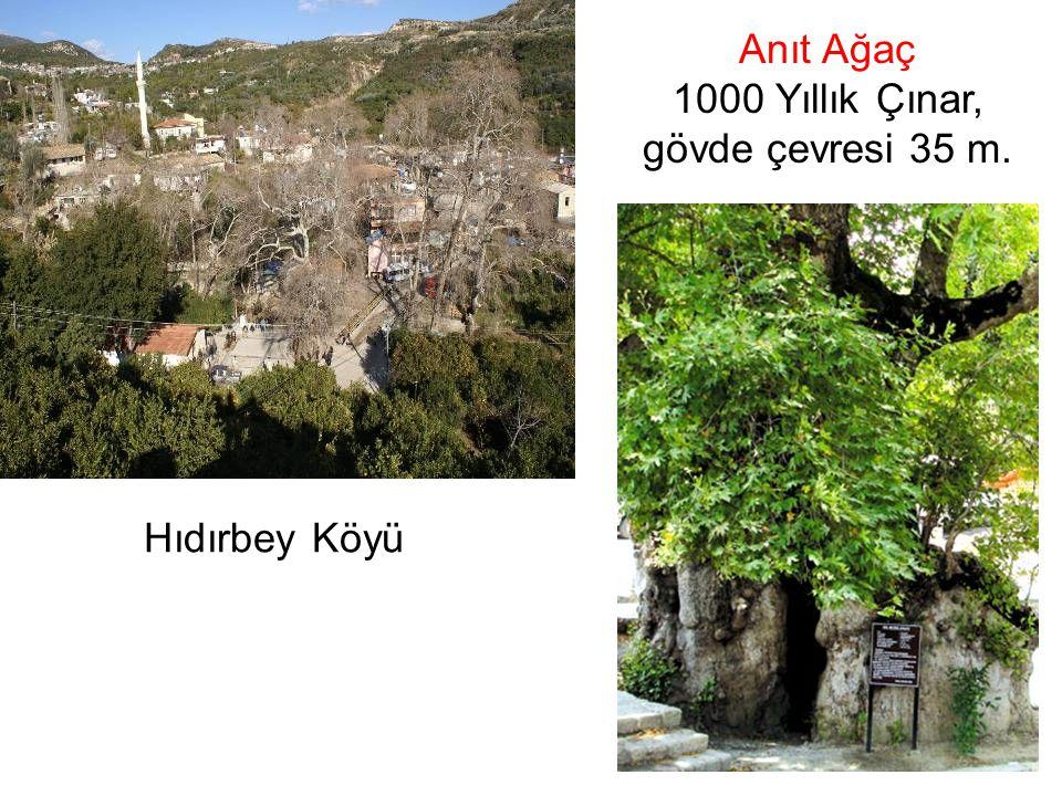 Hıdırbey Köyü Anıt Ağaç 1000 Yıllık Çınar, gövde çevresi 35 m.