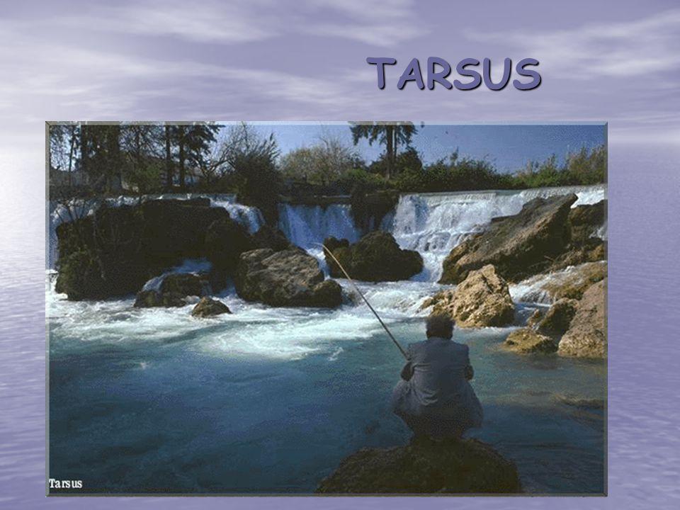 TARSUS TARSUS