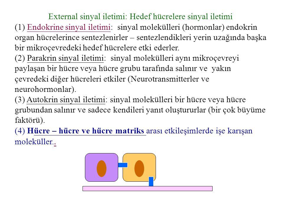 External sinyal iletimi: Hedef hücrelere sinyal iletimi (1) Endokrine sinyal iletimi: sinyal molekülleri (hormonlar) endokrin organ hücrelerince sente