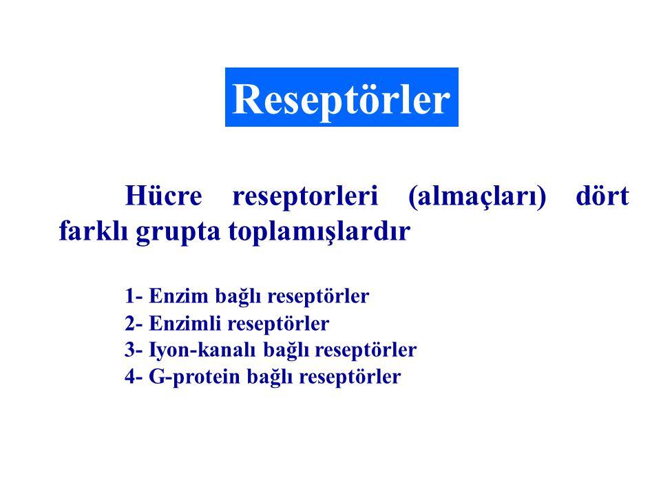Reseptörler Hücre reseptorleri (almaçları) dört farklı grupta toplamışlardır 1- Enzim bağlı reseptörler 2- Enzimli reseptörler 3- Iyon-kanalı bağlı re
