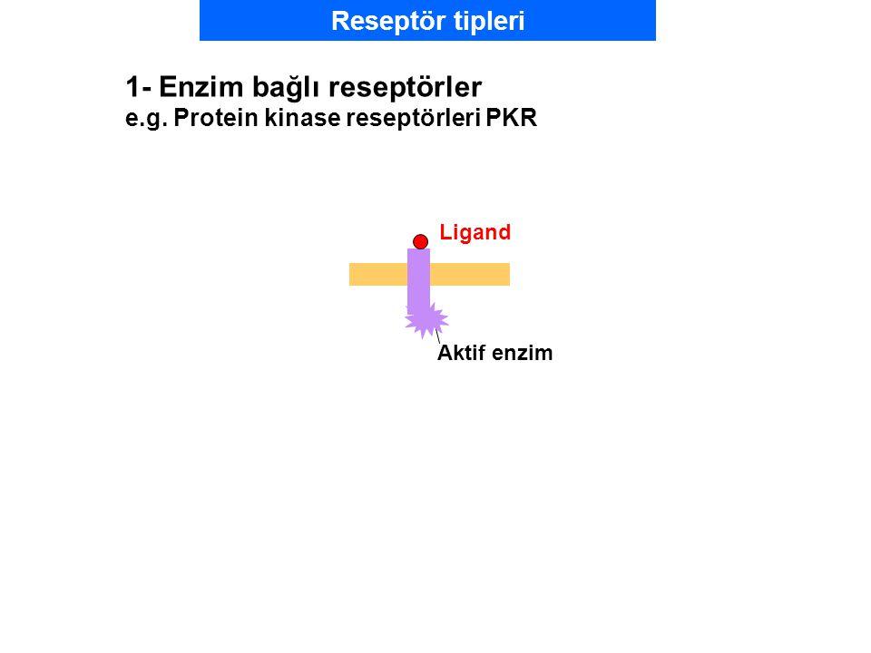 Ligand Aktif enzim 1- Enzim bağlı reseptörler e.g. Protein kinase reseptörleri PKR Reseptör tipleri