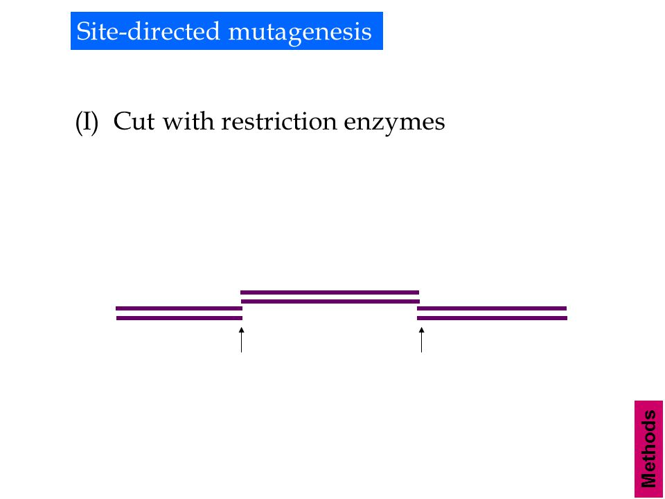 Methods Site-directed mutagenesis (I) Cut with restriction enzymes
