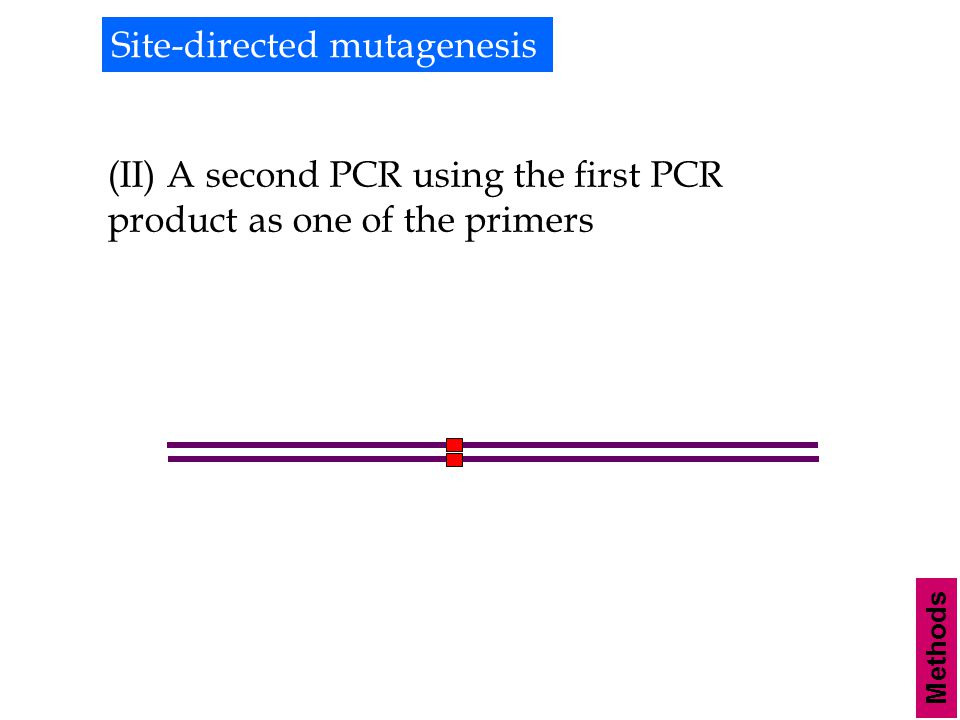Methods Site-directed mutagenesis (II) A second PCR using the first PCR product as one of the primers