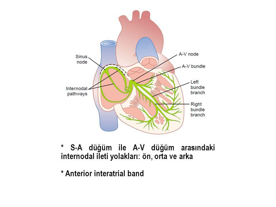 * S-A düğüm ile A-V düğüm arasındaki internodal ileti yolakları: ön, orta ve arka * Anterior interatrial band