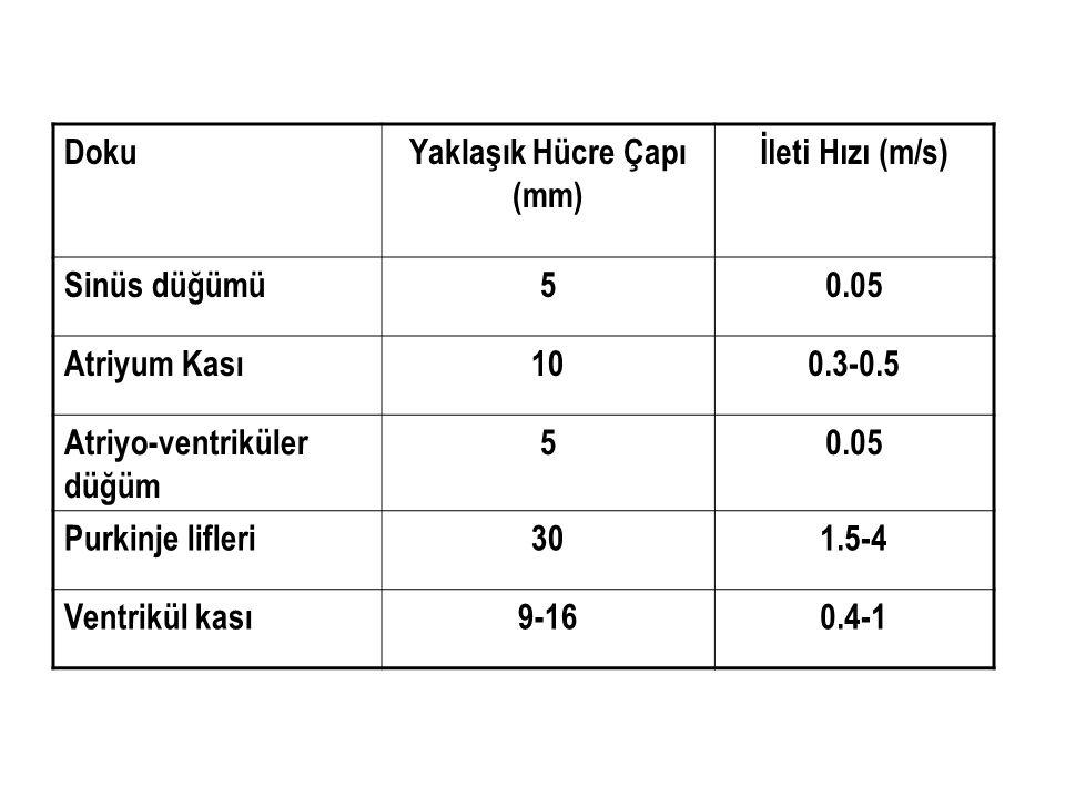 DokuYaklaşık Hücre Çapı (mm) İleti Hızı (m/s) Sinüs düğümü50.05 Atriyum Kası100.3-0.5 Atriyo-ventriküler düğüm 50.05 Purkinje lifleri301.5-4 Ventrikül