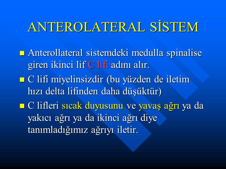ANTEROLATERAL SİSTEM Anterollateral sistemdeki medulla spinalise giren ikinci lif C lifi adını alır. Anterollateral sistemdeki medulla spinalise giren
