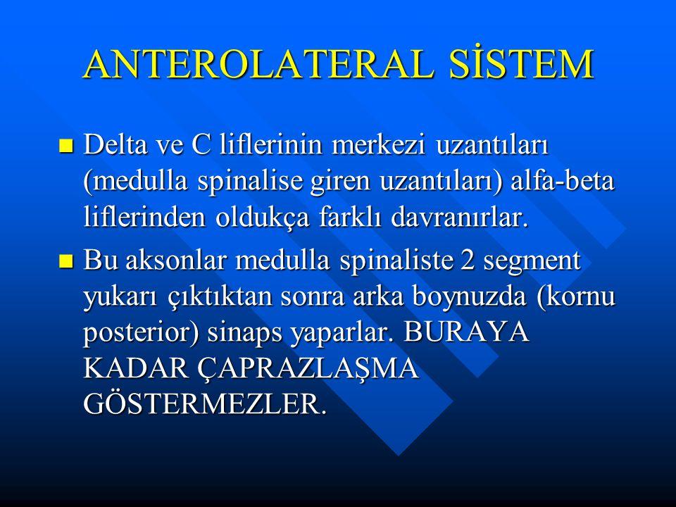 Delta ve C liflerinin merkezi uzantıları (medulla spinalise giren uzantıları) alfa-beta liflerinden oldukça farklı davranırlar. Delta ve C liflerinin