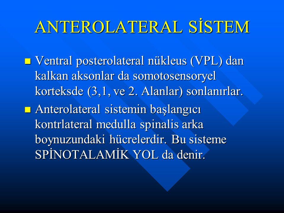 Ventral posterolateral nükleus (VPL) dan kalkan aksonlar da somotosensoryel korteksde (3,1, ve 2. Alanlar) sonlanırlar. Ventral posterolateral nükleus