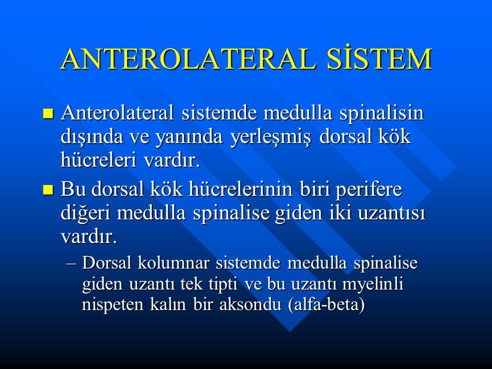 ANTEROLATERAL SİSTEM Anterolateral sistemde medulla spinalisin dışında ve yanında yerleşmiş dorsal kök hücreleri vardır. Anterolateral sistemde medull