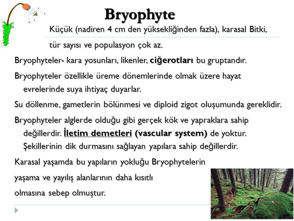 Küçük (nadiren 4 cm den yüksekli ğ inden fazla), karasal Bitki, Küçük (nadiren 4 cm den yüksekli ğ inden fazla), karasal Bitki, tür sayısı ve populasy