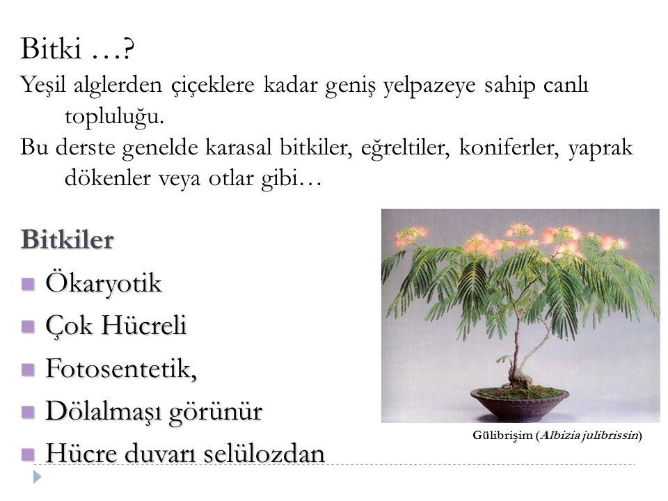 Bitkiler …? I.Atmosfer gazı ayarlayıcı A. Atmosferdeki Oksijen fotosentezin bir sonucudur