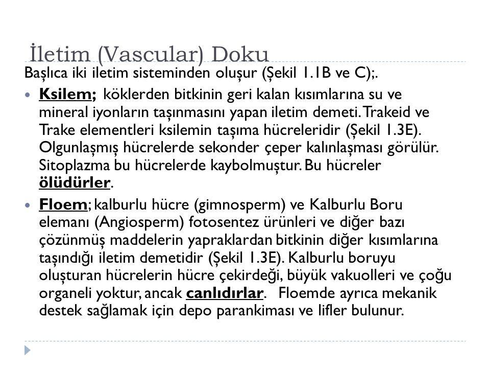 İletim (Vascular) Doku Başlıca iki iletim sisteminden oluşur (Şekil 1.1B ve C);. Ksilem; köklerden bitkinin geri kalan kısımlarına su ve mineral iyonl