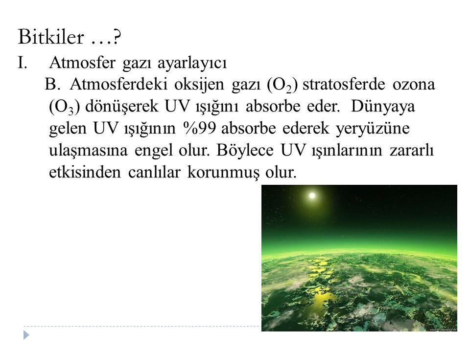 Bitkiler …? I.Atmosfer gazı ayarlayıcı B. Atmosferdeki oksijen gazı (O 2 ) stratosferde ozona (O 3 ) dönüşerek UV ışığını absorbe eder. Dünyaya gelen