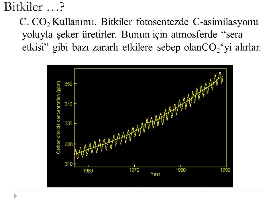 """Bitkiler …? C. CO 2 Kullanımı. Bitkiler fotosentezde C-asimilasyonu yoluyla şeker üretirler. Bunun için atmosferde """"sera etkisi"""" gibi bazı zararlı etk"""