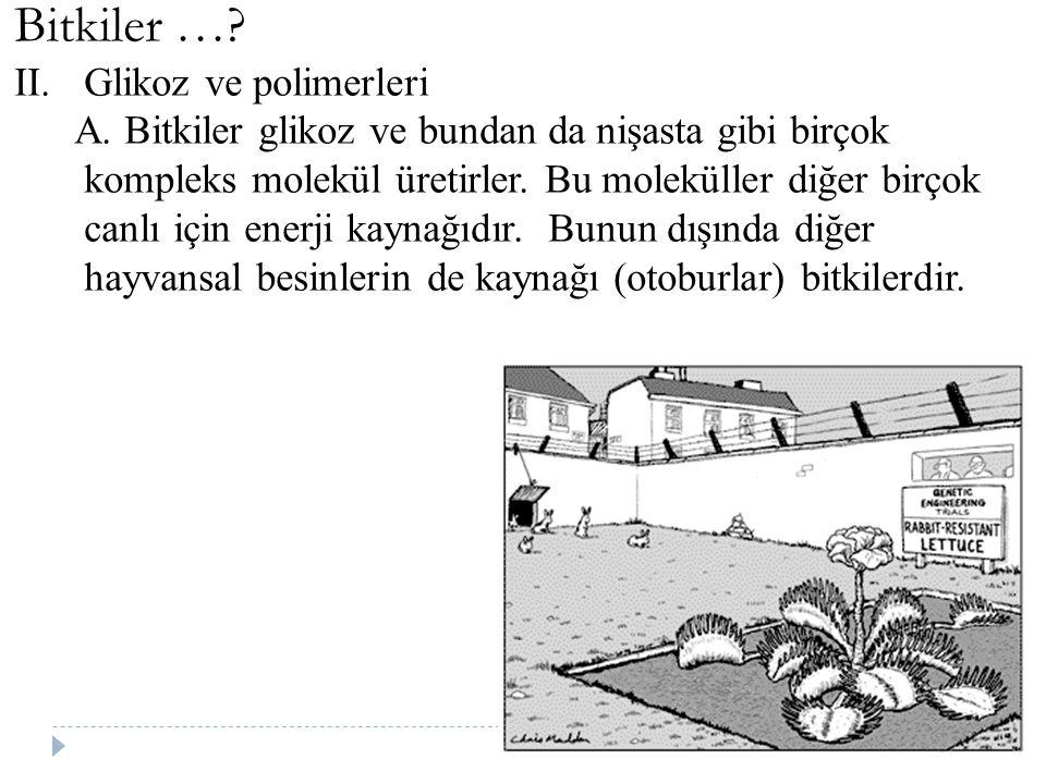 Bitkiler …? II.Glikoz ve polimerleri A. Bitkiler glikoz ve bundan da nişasta gibi birçok kompleks molekül üretirler. Bu moleküller diğer birçok canlı