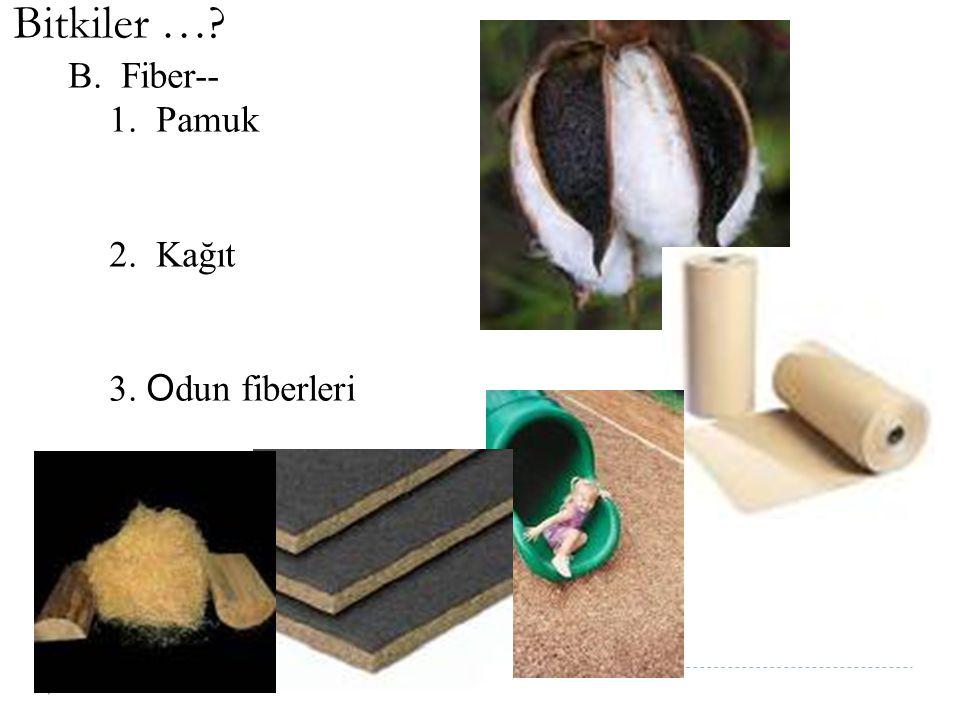 Bitkiler ….III.Diğer faydalar A.