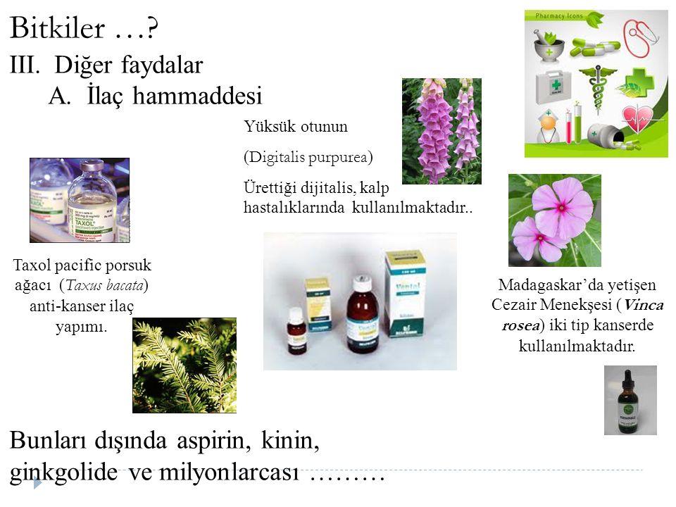 Bitkiler …? III.Diğer faydalar A. İlaç hammaddesi Bunları dışında aspirin, kinin, ginkgolide ve milyonlarcası ……… Madagaskar'da yetişen Cezair Menekşe