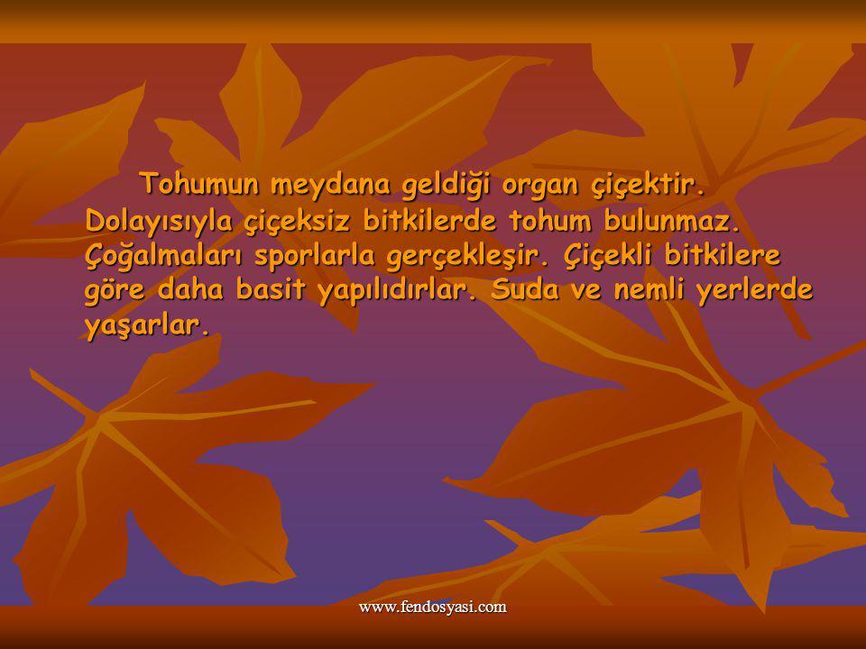 www.fendosyasi.com Tohumun meydana geldiği organ çiçektir. Dolayısıyla çiçeksiz bitkilerde tohum bulunmaz. Çoğalmaları sporlarla gerçekleşir. Çiçekli