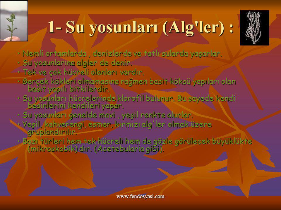 www.fendosyasi.com 1- Su yosunları (Alg'ler) : Nemli ortamlarda, denizlerde ve tatlı sularda yaşarlar. Nemli ortamlarda, denizlerde ve tatlı sularda y