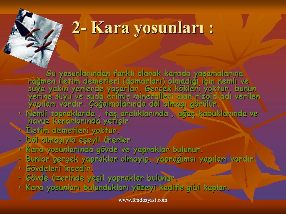 www.fendosyasi.com 2- Kara yosunları : Su yosunlarından farklı olarak karada yaşamalarına rağmen iletim demetleri (damarları) olmadığı için nemli ve s