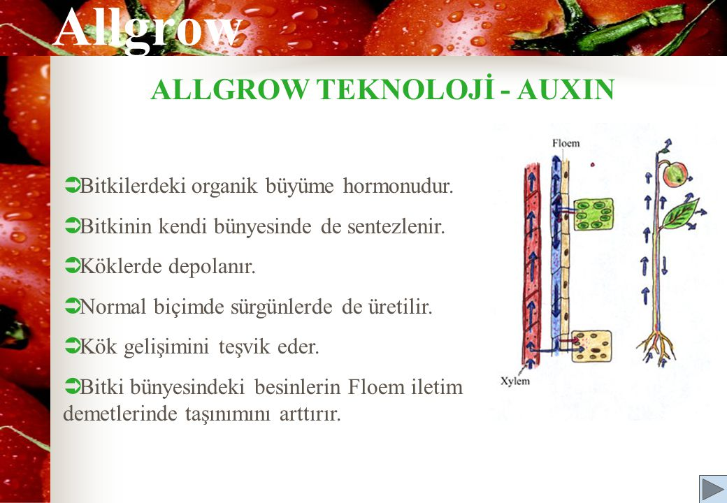 ALLGROW TEKNOLOJİ - AUXIN  Bitkilerdeki organik büyüme hormonudur.  Bitkinin kendi bünyesinde de sentezlenir.  Köklerde depolanır.  Normal biçimde
