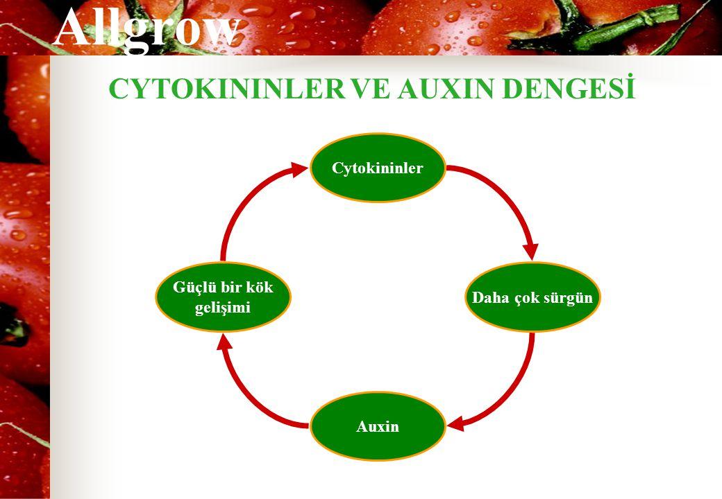 Allgrow Cytokininler Daha çok sürgün Auxin Güçlü bir kök gelişimi CYTOKININLER VE AUXIN DENGESİ