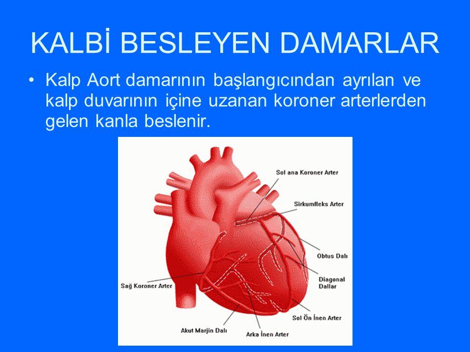 KALBİ BESLEYEN DAMARLAR Kalp Aort damarının başlangıcından ayrılan ve kalp duvarının içine uzanan koroner arterlerden gelen kanla beslenir.