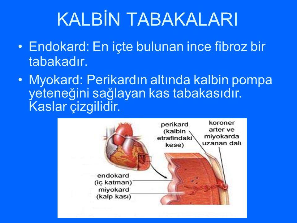 KALBİN TABAKALARI Endokard: En içte bulunan ince fibroz bir tabakadır. Myokard: Perikardın altında kalbin pompa yeteneğini sağlayan kas tabakasıdır. K