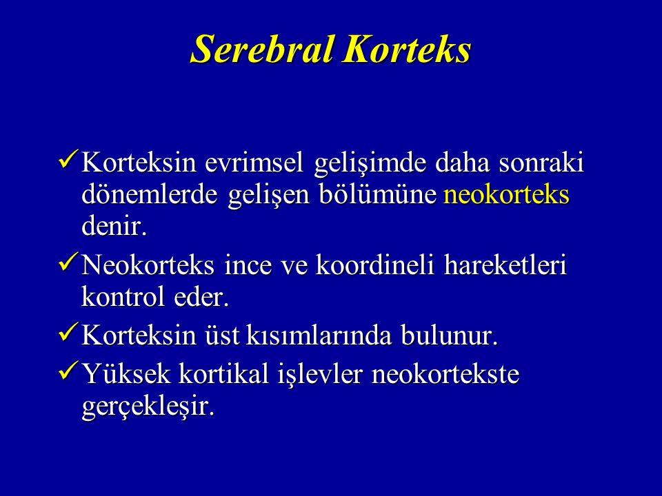 Serebral Korteks Korteksin evrimsel gelişimde daha sonraki dönemlerde gelişen bölümüne neokorteks denir.