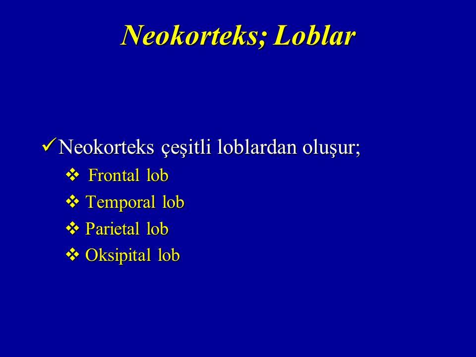 Neokorteks; Loblar Neokorteks çeşitli loblardan oluşur; Neokorteks çeşitli loblardan oluşur;  Frontal lob  Temporal lob  Parietal lob  Oksipital lob