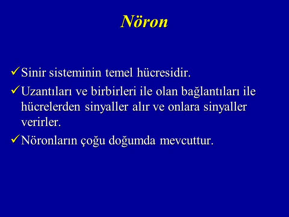 Nöron Bir nöron hücresini oluşturan bölümler; Bir nöron hücresini oluşturan bölümler;  Hücre gövdesi; Nükleusu barındırırNükleusu barındırır Hücrenin metabolik işlevlerini sürdürürHücrenin metabolik işlevlerini sürdürür  Dentrit  Akson Aksonlar bir çok dala ayrılarak sonlanır (akson terminali)Aksonlar bir çok dala ayrılarak sonlanır (akson terminali)  Miyelin Aksonun etrafını saran, yağdan zengin, beyaz renkli bir kılıftırAksonun etrafını saran, yağdan zengin, beyaz renkli bir kılıftır İnpulsların iletilmesinde aktif görev yaparİnpulsların iletilmesinde aktif görev yapar
