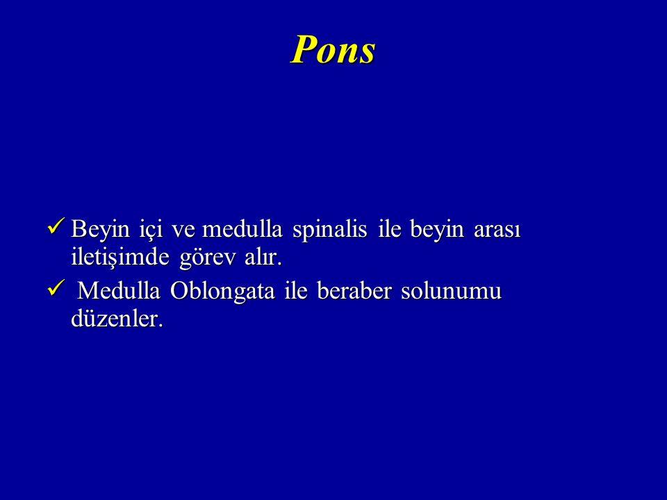 Pons Beyin içi ve medulla spinalis ile beyin arası iletişimde görev alır.