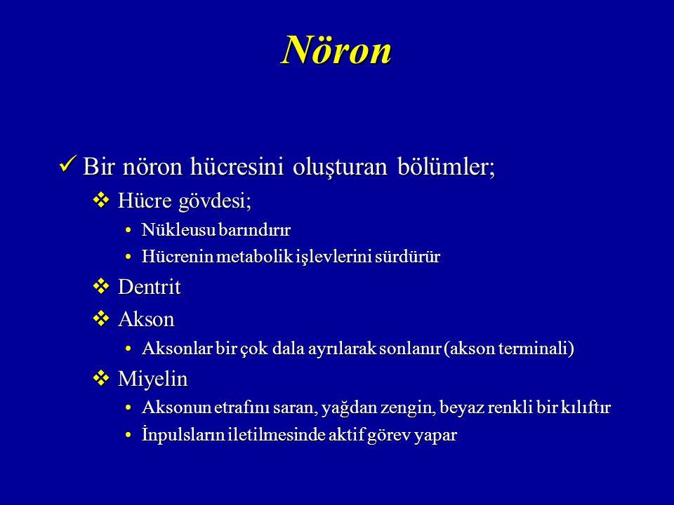 Nöron