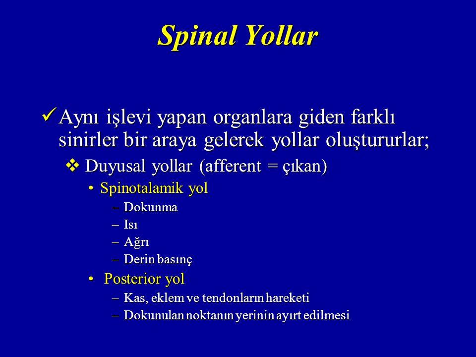 Spinal Yollar Aynı işlevi yapan organlara giden farklı sinirler bir araya gelerek yollar oluştururlar; Aynı işlevi yapan organlara giden farklı sinirler bir araya gelerek yollar oluştururlar;  Duyusal yollar (afferent = çıkan) Spinotalamik yolSpinotalamik yol –Dokunma –Isı –Ağrı –Derin basınç Posterior yol Posterior yol –Kas, eklem ve tendonların hareketi –Dokunulan noktanın yerinin ayırt edilmesi