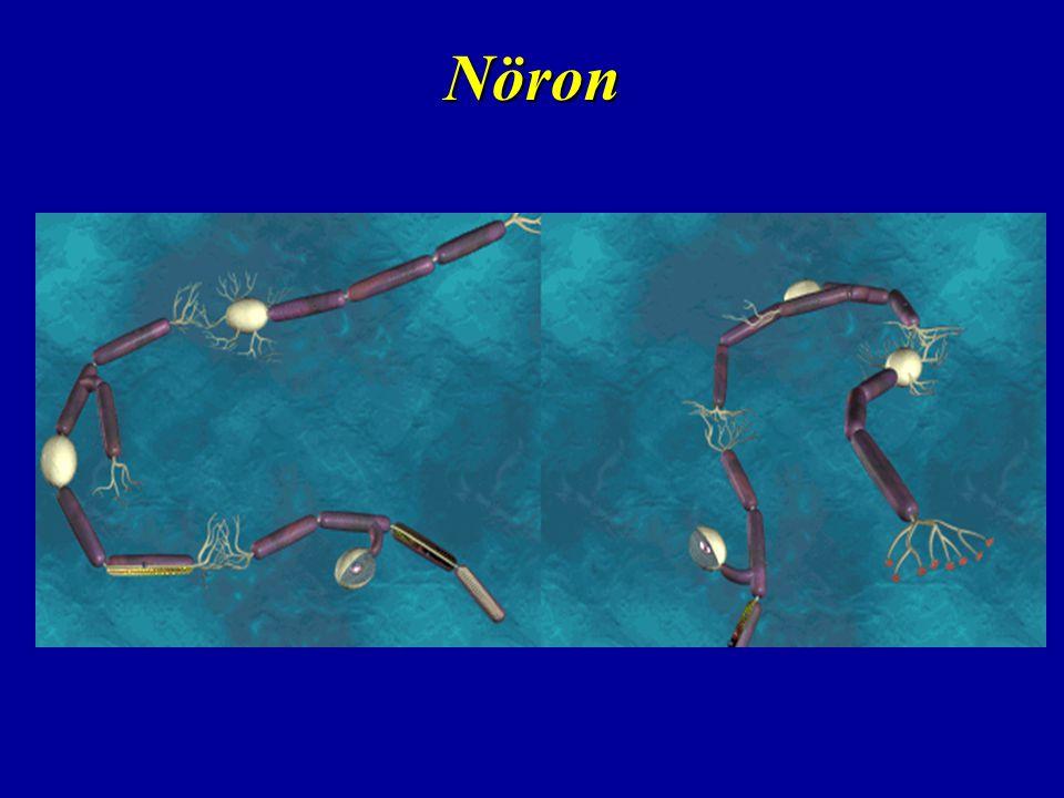 Sinirsel İleti Nöron içerisinde uyarının iletilmesi bir takım biyokimyasal reaksiyonlar sonucu oluşan elektiriksel aktivite ile oluşur.