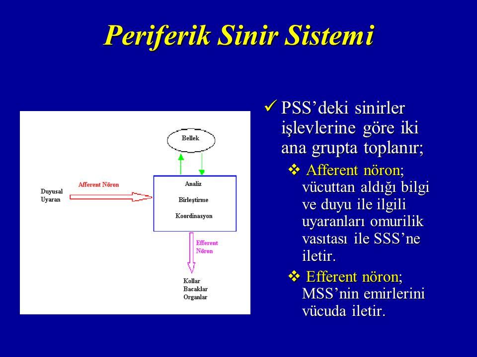PSS'deki sinirler işlevlerine göre iki ana grupta toplanır; PSS'deki sinirler işlevlerine göre iki ana grupta toplanır;  Afferent nöron; vücuttan aldığı bilgi ve duyu ile ilgili uyaranları omurilik vasıtası ile SSS'ne iletir.