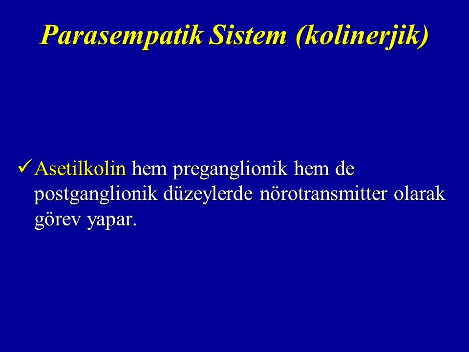 Parasempatik Sistem (kolinerjik) Asetilkolin hem preganglionik hem de postganglionik düzeylerde nörotransmitter olarak görev yapar.